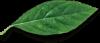 leaf-free-img-2.png